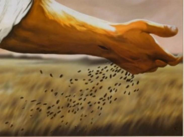 sementes